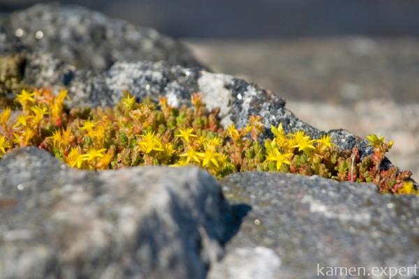 Гранит и цветы